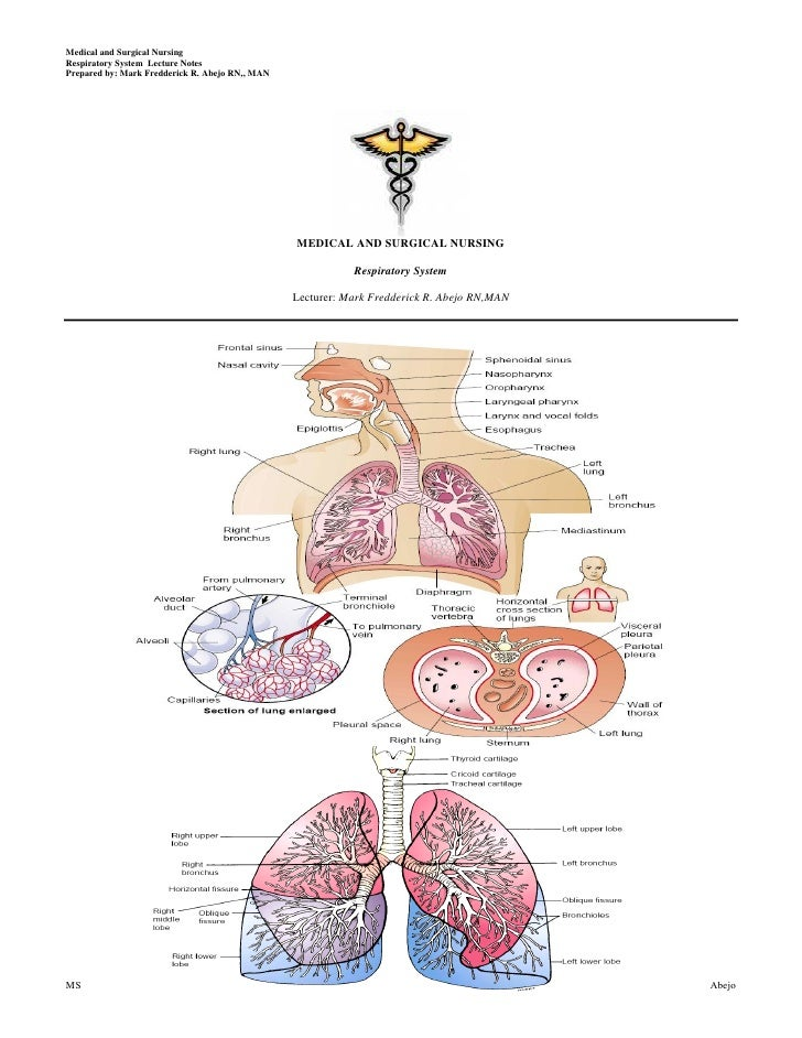 Medical and Surgical NursingRespiratory System Lecture NotesPrepared by: Mark Fredderick R. Abejo RN,, MAN                ...