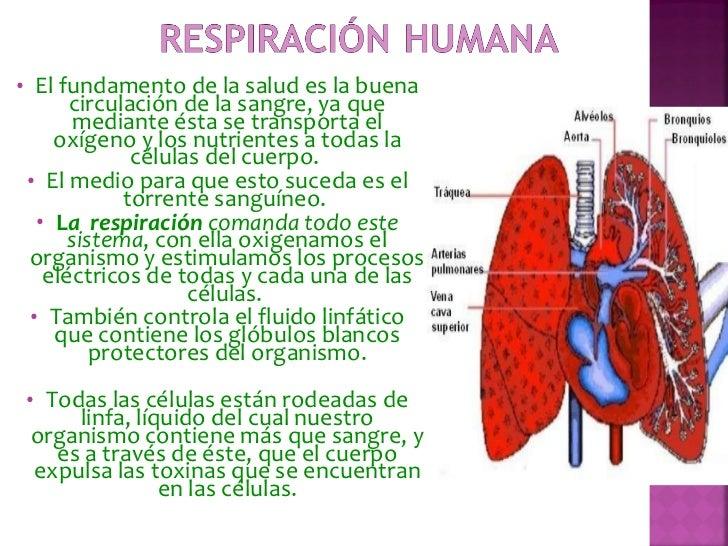 <ul><li>El fundamento de la salud es la buena circulación de la sangre, ya que mediante ésta se transporta el oxígeno y lo...