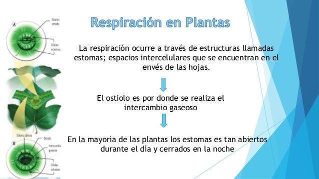 Respiracion De Las Plantas Gif: Respiración