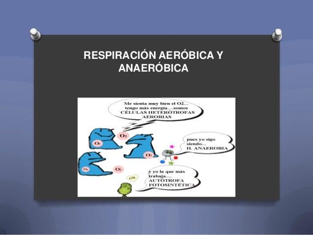 RESPIRACIÓN AERÓBICA Y     ANAERÓBICA