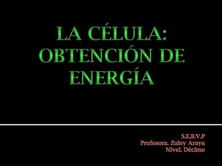    Las células necesitan energía para    realizar TODAS las actividades.   Esta energía se encuentra en las    moléculas...