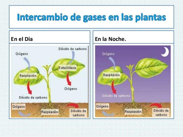 Respiracion De Las Plantas Gif: Ciencias Naturales CEUJA 2016: RESPIRACIÓN DE LAS PLANTAS