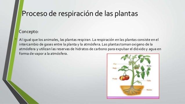 Respiracion De Las Plantas Gif: Respiración De Las Plantas
