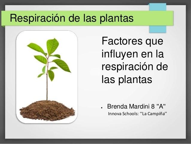 Factores que influyen en la respiraci n de las plantas - Plantas que aguantan temperaturas extremas ...