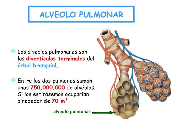 Respiracion Alveolar