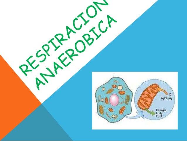 Respiracion Anaerobica