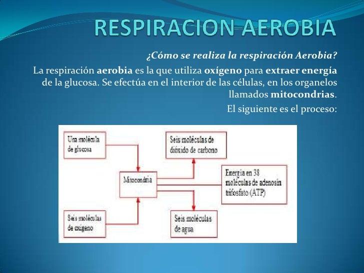 ¿Cómo se realiza la respiración Aerobia?La respiración aerobia es la que utiliza oxígeno para extraer energía  de la gluco...