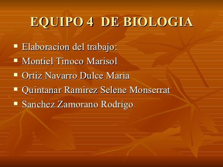 EQUIPO 4  DE BIOLOGIA <ul><li>Elaboracion del trabajo: </li></ul><ul><li>Montiel Tinoco Marisol </li></ul><ul><li>Ortiz Na...