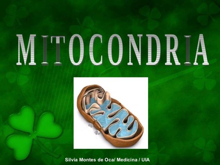 MITOCONDRIA Silvia Montes de Oca/ Medicina / UIA