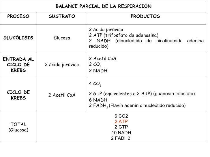 Fotosintesis y respiracion celular pdf 84
