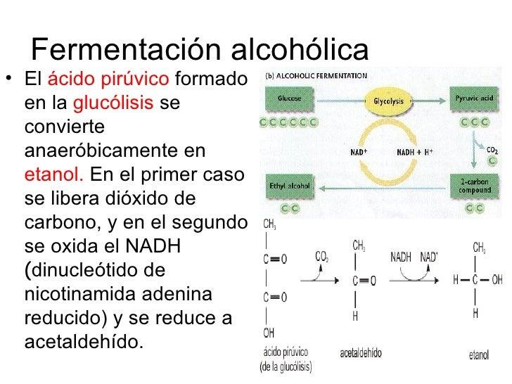 Satii sobre el alcoholismo