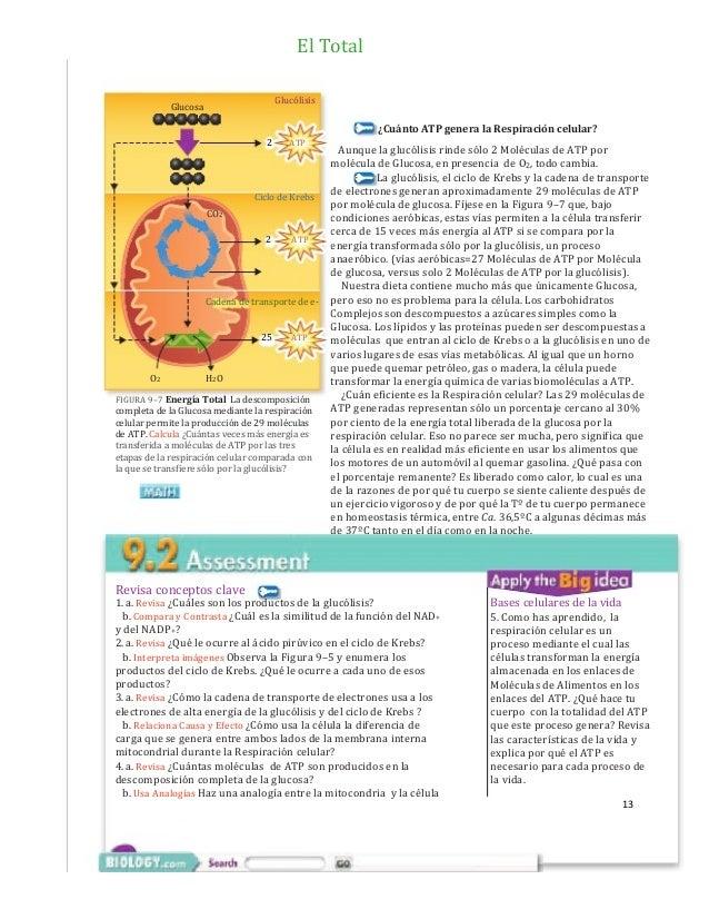 Respiración celular. Glicólisis, Ciclo de Krebs, Cadena de transport…