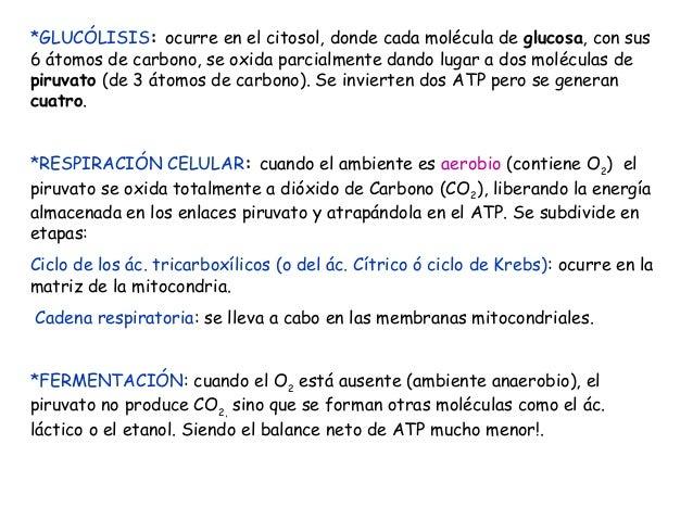 *GLUCÓLISIS: ocurre en el citosol, donde cada molécula de glucosa, con sus 6 átomos de carbono, se oxida parcialmente dand...