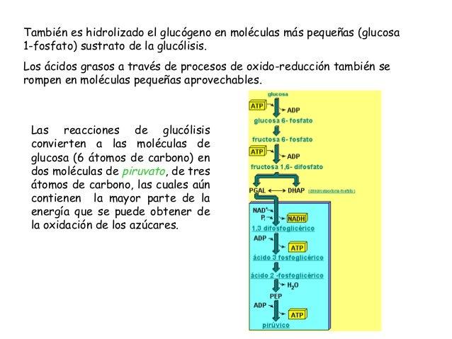 Ciclo de Krebs Ocurre en la matriz mitocondrial. Resultado: CO2 y electrones ricos en energía, que pasan vía NADH y FADH2 ...