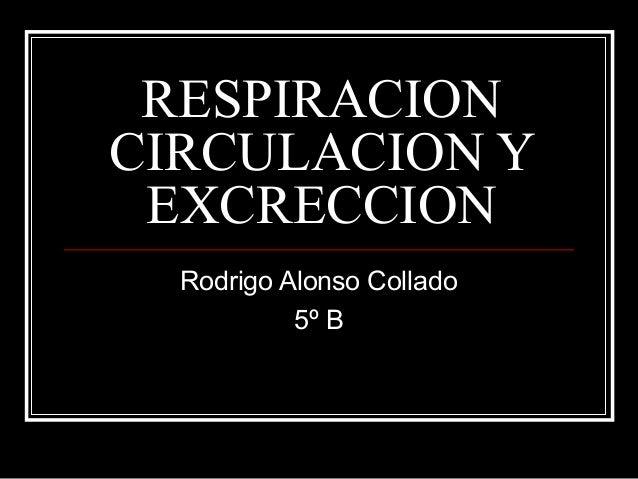 RESPIRACION CIRCULACION Y EXCRECCION Rodrigo Alonso Collado 5º B