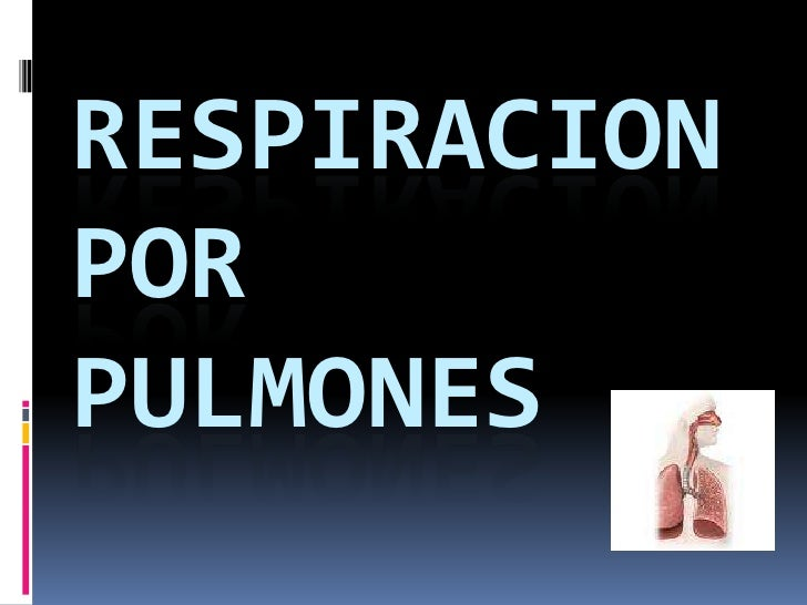 RESPIRACION POR PULMONES<br />