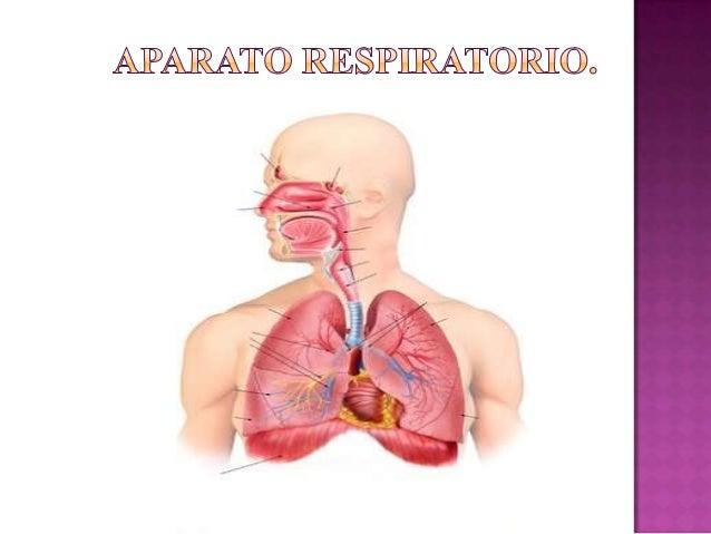 Respiracion Pulmonar Medina