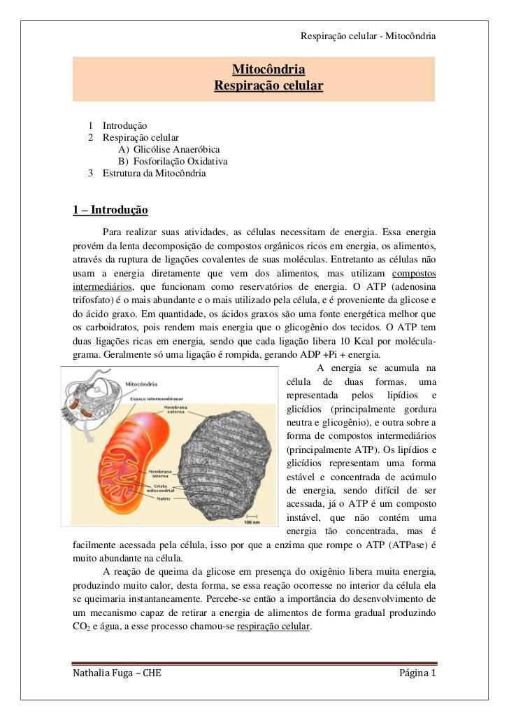 Respiração celular - Mitocôndria                                     Mitocôndria                                   Respira...
