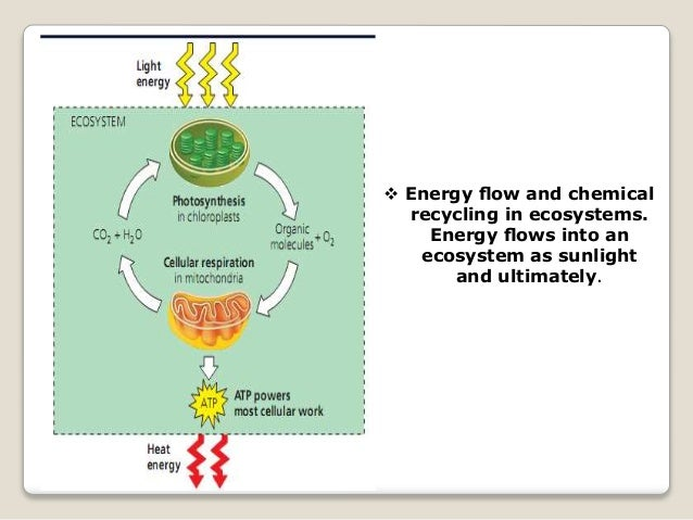  Energy flow and chemical recycling in ecosystems. Energy flows into an ecosystem as sunlight and ultimately.