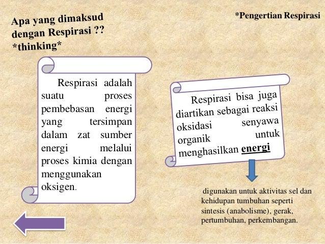Respirasi anaerob fisiologi tumbuhan pdf