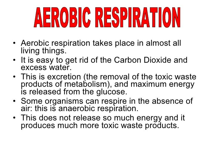 respiration aerobic place takes living