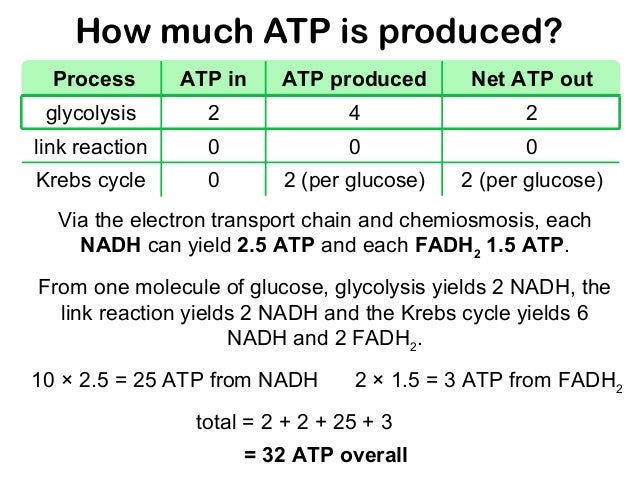 how many molecules of atp does fermentation yield