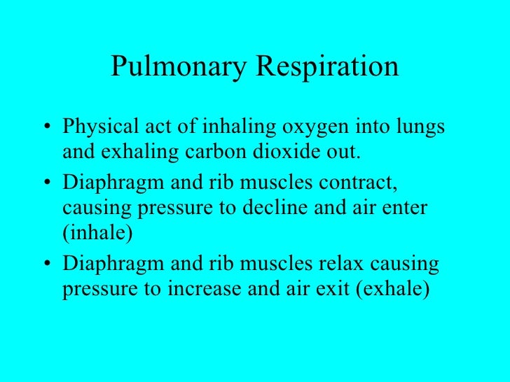 Pulmonary Respiration <ul><li>Physical act of inhaling oxygen into lungs and exhaling carbon dioxide out. </li></ul><ul><l...