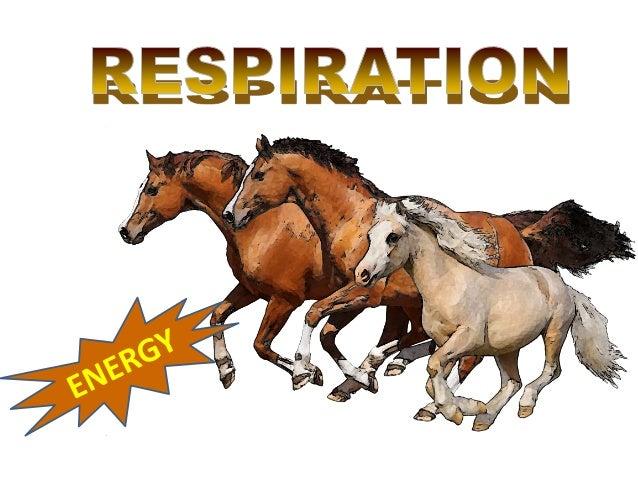 Two types of Respiration1   Internal / Cellular      Aerobic        respiration                             Anaerobic     ...