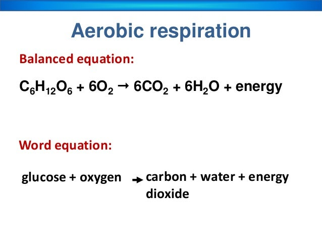 anaerobic respiration of yeast essay Cellular respiration is defined as an enzyme mediated process in which organic compounds such as glucose is broken down into simpler products with the release of energy (duka, diaz and villa, 2009).