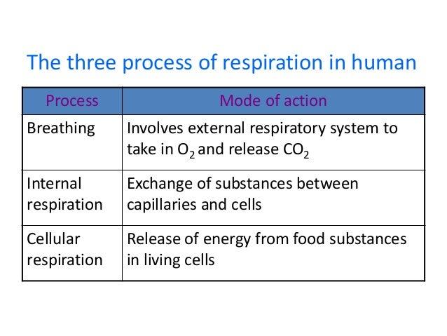 Respiration Igcse