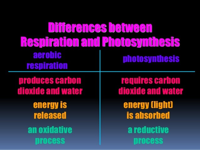 similarities between photosynthesis and respiration What's the difference between cellular respiration and photosynthesis photosynthesis and respiration are reactions that complement each other in the environment they are in reality the same reactions but occurring in reverse while in photosynthesis carbon dioxide and water yield glucose and.