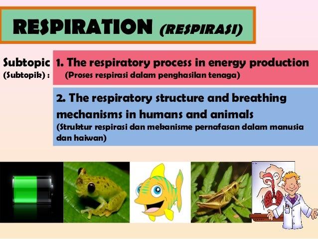 RESPIRATION (RESPIRASI) Subtopic (Subtopik) : 1. The respiratory process in energy production (Proses respirasi dalam peng...