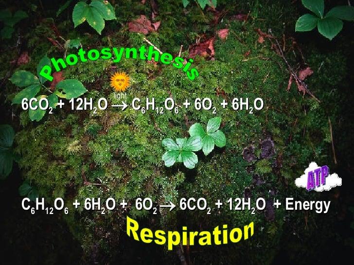 6CO 2  + 12H 2 O    C 6 H 12 O 6  + 6O 2  + 6H 2 O C 6 H 12 O 6  + 6H 2 O +  6O 2    6CO 2  + 12H 2 O  + Energy Photosyn...