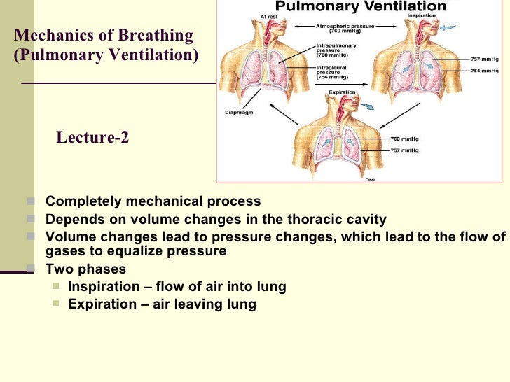Mechanics of Breathing (Pulmonary Ventilation) <ul><li>Completely mechanical process </li></ul><ul><li>Depends on volume c...