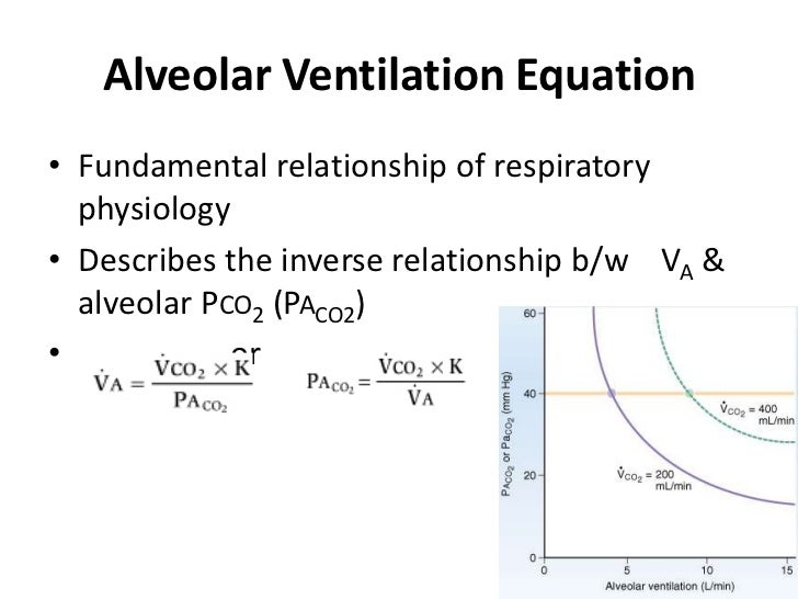 relationship between tidal volume and minute definition