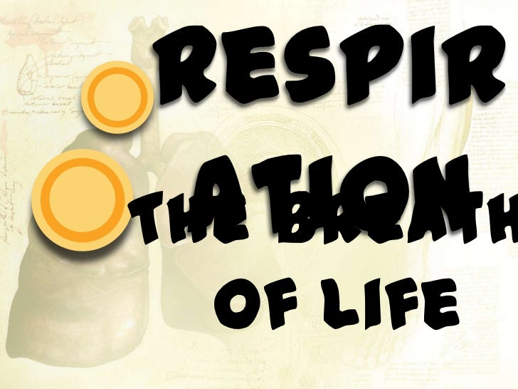 Respiration<br />The Breath of Life<br />