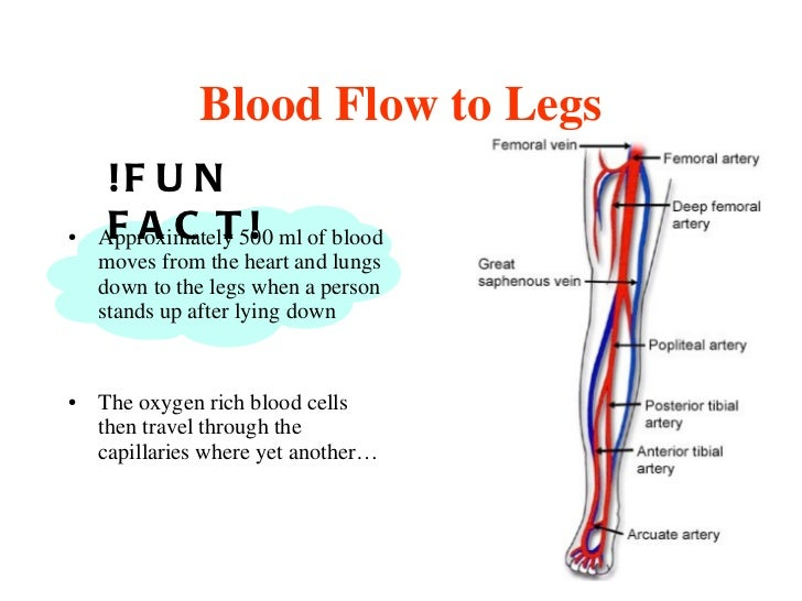 Respiration and circulation in human body