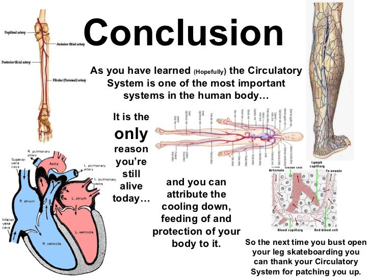 blood circulation in human body pdf