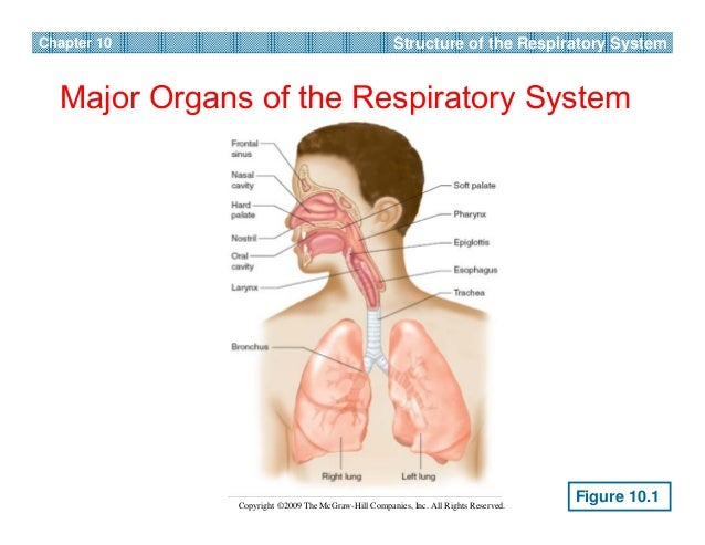 FISIOLOGI SENAM Respiration during exercise