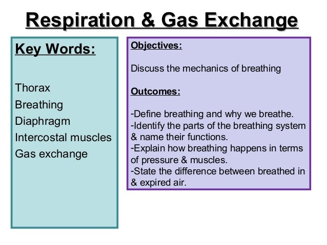 Diff bet breath and breathe definition