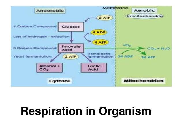 Respiration in Organism