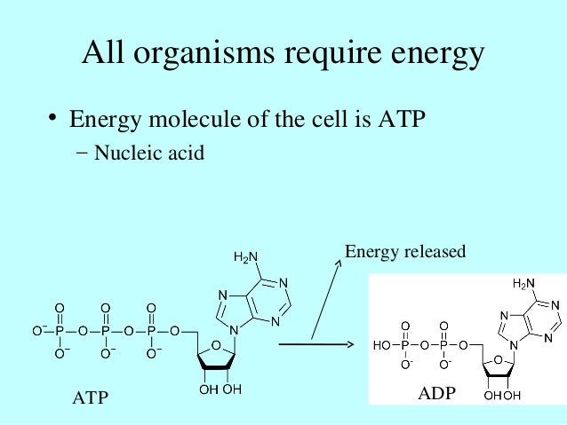All organisms require energy • Energy molecule of the cell is ATP – Nucleic acid Energy released ATP ADP