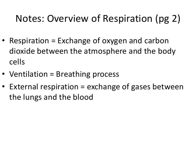 the process of respiration essay What's the difference between cellular respiration and photosynthesis definitions of photosynthesis and respiration photosynthesis is a process in photoautotrophs that converts carbon dioxide into organic compounds in the presence of sunlight.