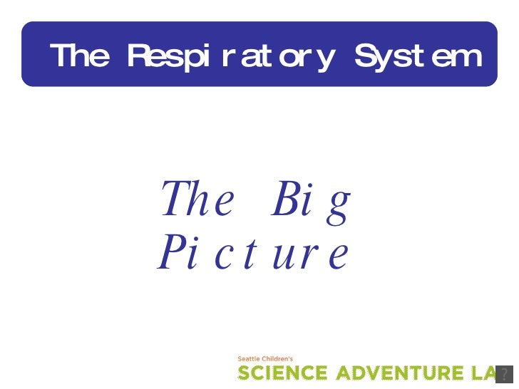 The Big Picture The Respiratory System