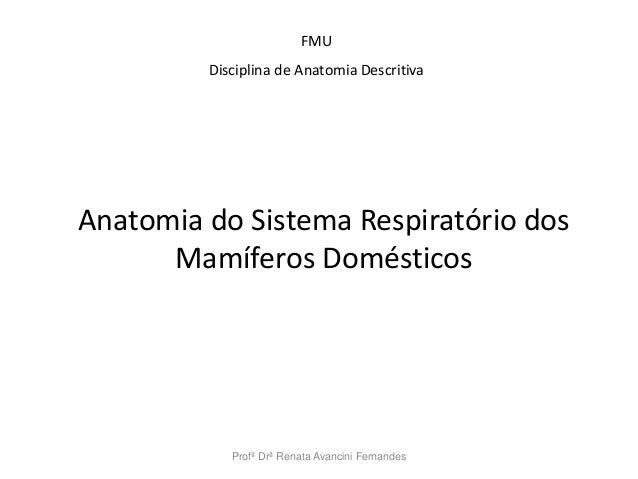 Profª Drª Renata Avancini Fernandes FMU Disciplina de Anatomia Descritiva Anatomia do Sistema Respiratório dos Mamíferos D...
