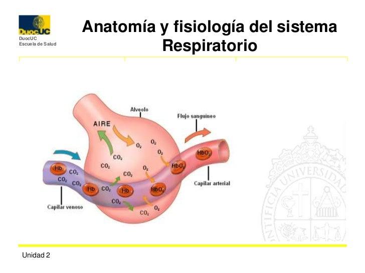 Respiratorio ans 1100[1]