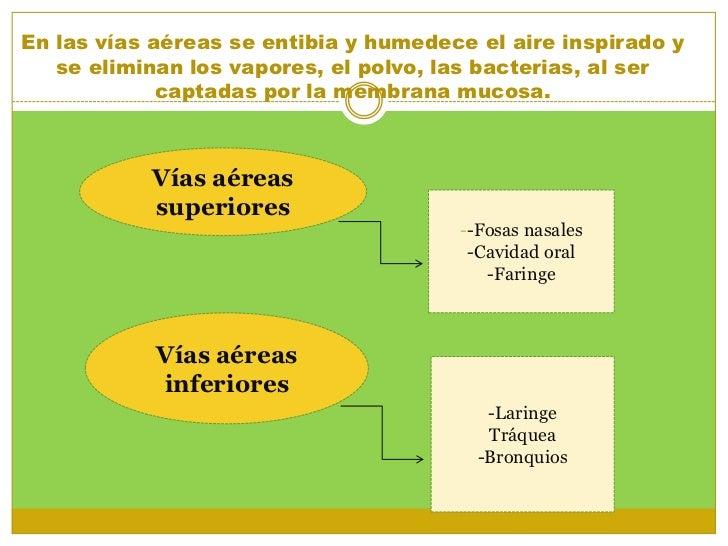 Encantador Carteles De Las Vías Anatómicas Friso - Anatomía de Las ...