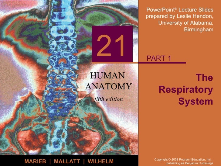The Respiratory System PART 1