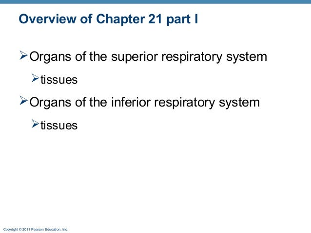 Overview of Chapter 21 part I Organs of the superior respiratory system tissues  Organs of the inferior respiratory sys...