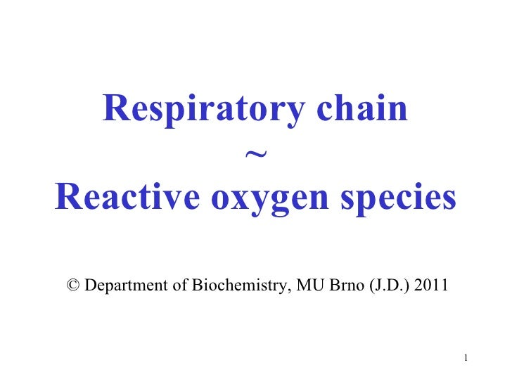 Respiratory chain ~ Rea ctive oxygen species ©   Department of  Biochemi stry, MU Brno  (J.D.) 2011